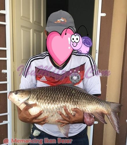 menangkap ikan besar